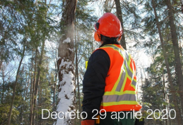 Decreto 29 aprile 2020 | Criteri minimi operatori forestali