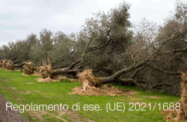 Regolamento di esecuzione (UE) 2021/1688