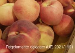 Regolamento delegato (UE) 2021/1691