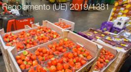 Regolamento (UE) 2019/1381
